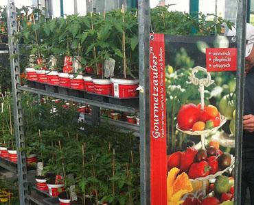 Neuheiten Jungpflanzen Gourmetzauber